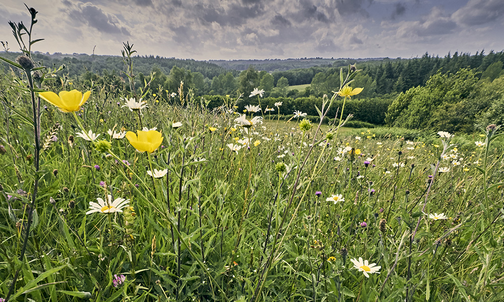 The High Weald AONB is an outstanding example of Sussex countryside